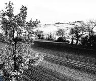 19/03/2021 - Campagna in località Borgo Bicchia