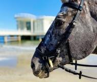 09/11/2020 - Cavallo in posa