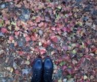 24/10/2020 - Piedi nell'autunno