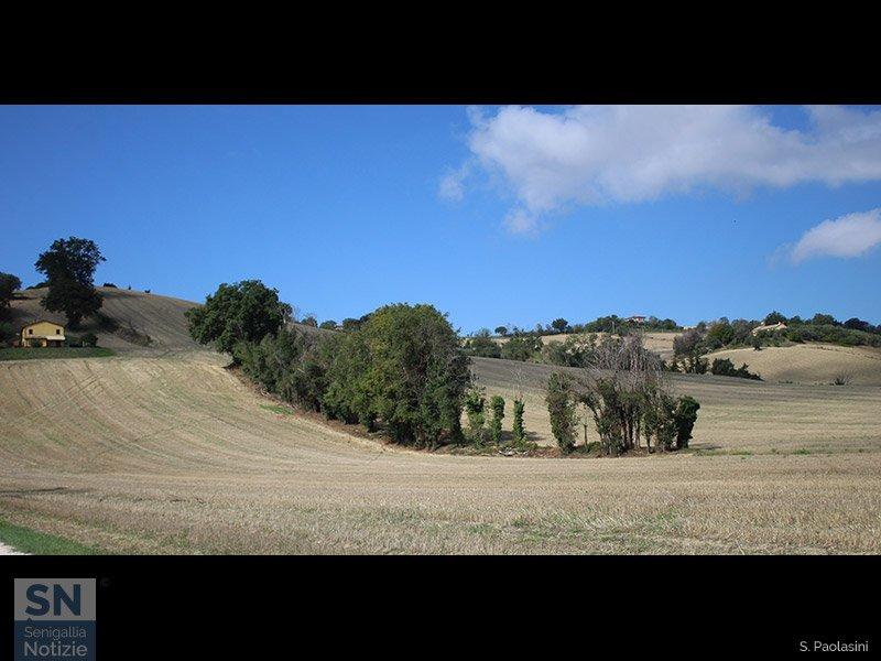 15/09/2021 - Barriera di alberi