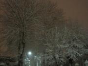 Alberi carichi di neve lungo via Gramsci