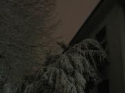 Alberi piegati dal peso della neve