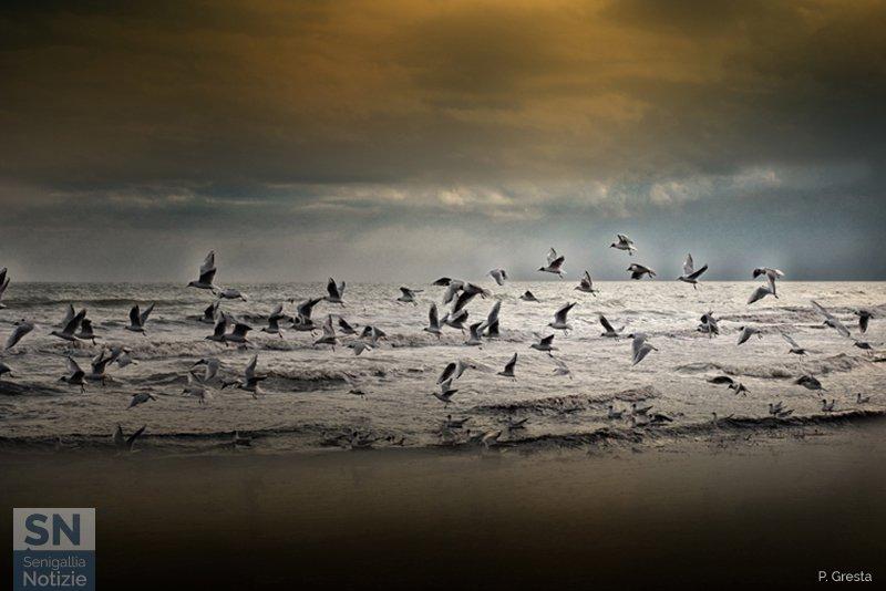 03/08/2019 - Il volo sul mare