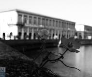 03/04/2019 - Fiore di città