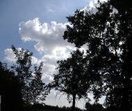 15/12/2016 - Rami, nuvole e cielo
