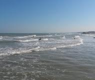 02/02/2016 - Surf nel mare di Senigallia