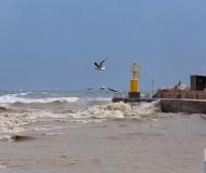 01/02/2019 - Gabbiani sulla mareggiata