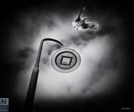 09/02/2020 - Il gabbiano e il lampione
