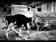 09/01/2013 - Persone e animali della fattoria