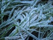 10/01/2013 - Fili d\'erba ghiacciati