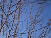 11/01/2013 - Gli alberi in inverno...