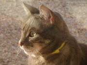 16/01/2013 - Primo piano di un gatto