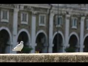 15/06/2013 - Un gabbiano sul ponte del Misa