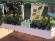 Mercato bio Mezza Campagna: piante aromatiche
