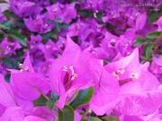 23/07/2015 - Pianta fiorita