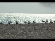 24/07/2015 - Gabbiani in spiaggia