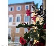 02/07/2019 - Fiori in piazza Roma