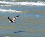 19/05/2016 - Volo planare