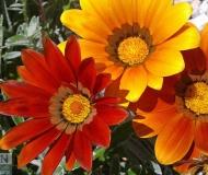 12/05/2017 - Rosso, giallo, arancio