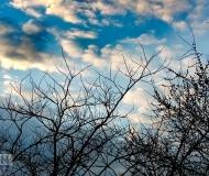 26/03/2017 - Rami e nuvole