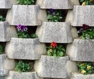 09/03/2020 - Muro fiorito