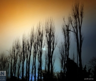 13/03/2020 - Alberi al tramonto