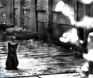 16/03/2020 - In giro neanche quattro gatti