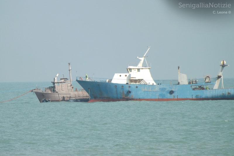 Le motonavi sgomberate dal porto di Senigallia