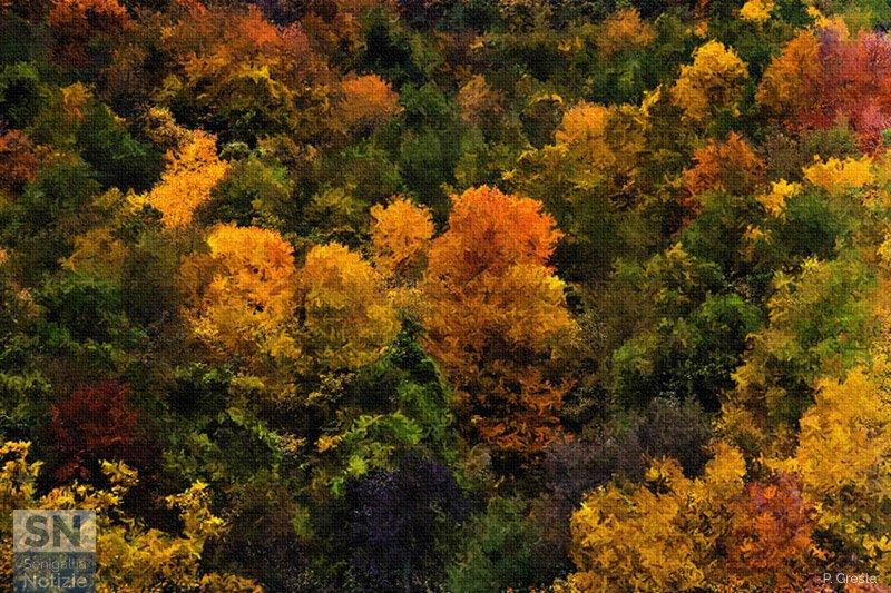 09/11/2018 - Foliage