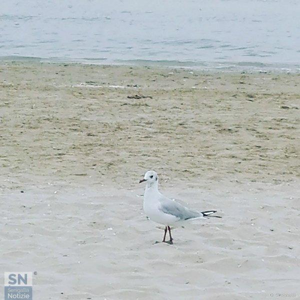 18/11/2018 - Passeggio in spiaggia