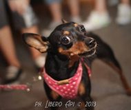Passeggiata cani-padroni a Senigallia