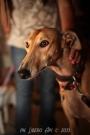 Cani e padroni sul lungomare di Senigallia