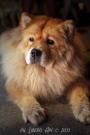 20130816-passeggiata-canina-2