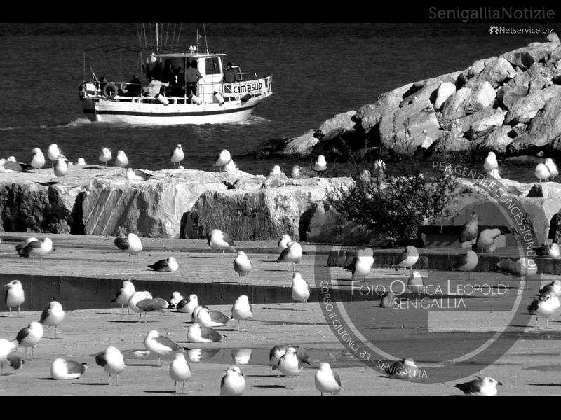 Gabbiani al porto di Senigallia - Leopoldi-1882