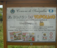 Senigallia: sporcizia e incuria nel Bosco di Topolino