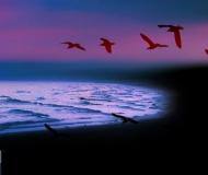 28/09/2018 - Paesaggio marino in violaceo