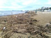 Lato sud della spiaggia di velluto invasa da rami e tronchi