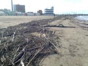Detriti e rifiuti sulla spiaggia di Senigallia