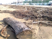 Tronchi e rami anche di grosse dimensioni sulla spiaggia