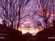 18/01/2011 - Tramonto tra alberi e case a Senigallia