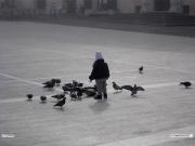 27/01/2011 - Bambino mentre dà da mangiare ai piccioni in piazza del Duca