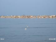 08/03/2011 - Gabbiani al sole