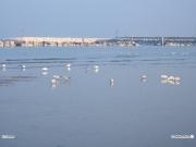 15/03/2011 - Gabbiani e bassa marea a Senigallia