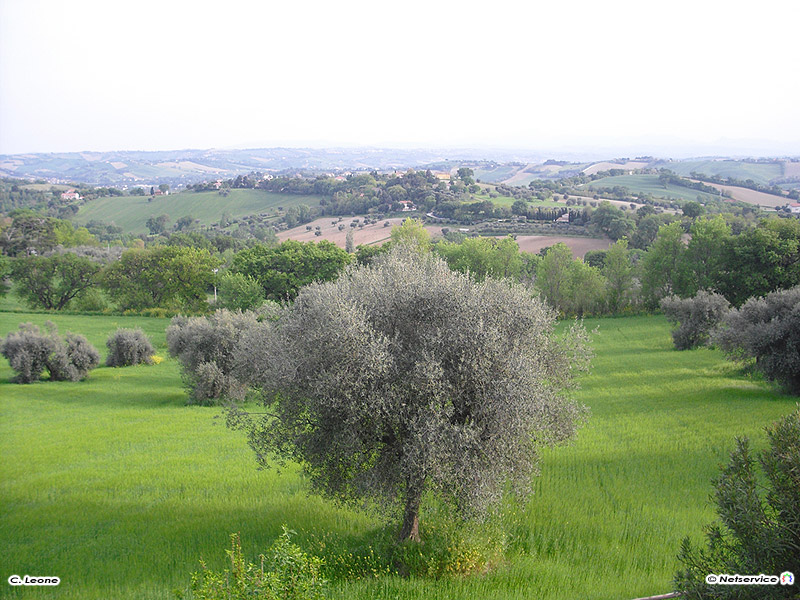 01/06/2010 - Panorama da Scapezzano